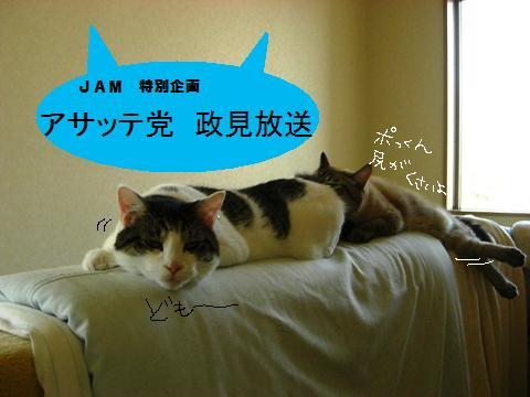 Jam809